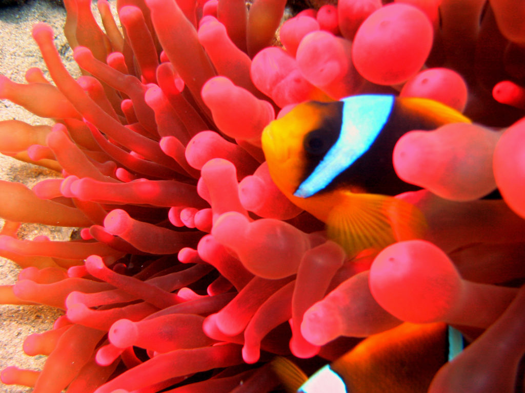Marsa Alam as one of the best Egypt diving experiences