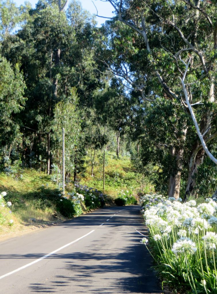 Flowers Madeira